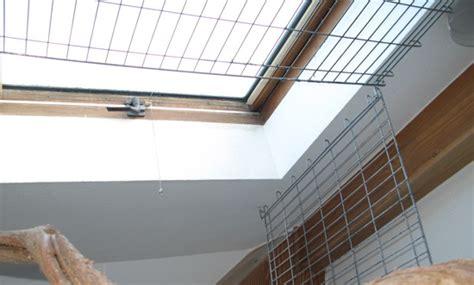 Wie Sichert Man Ein Dachfenster Im Papageienzimmer