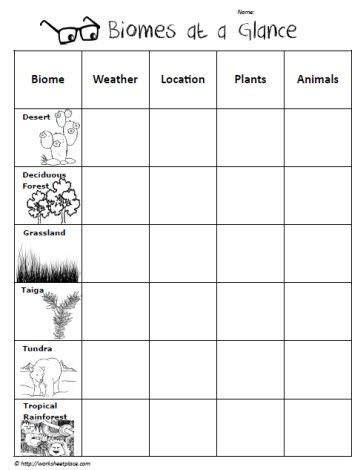 Science Biomes Graphic Organizer Worksheet