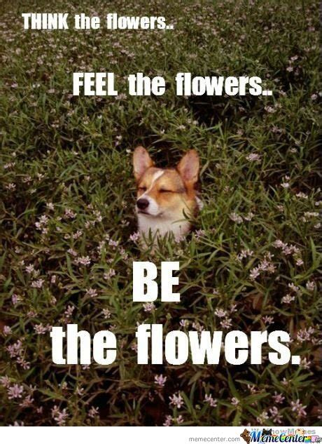 Flower Memes - flower memes best collection of funny flower pictures