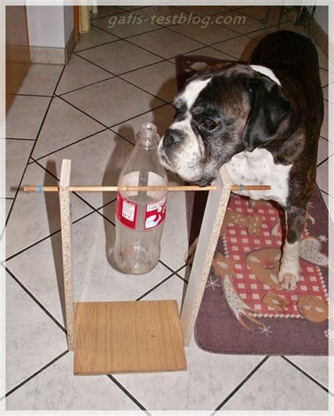 mein basteltipp hunde intelligenzspielzeug bauen