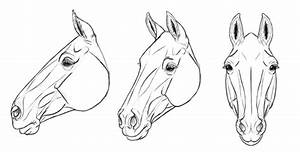 How To Draw A Horse Head Side View