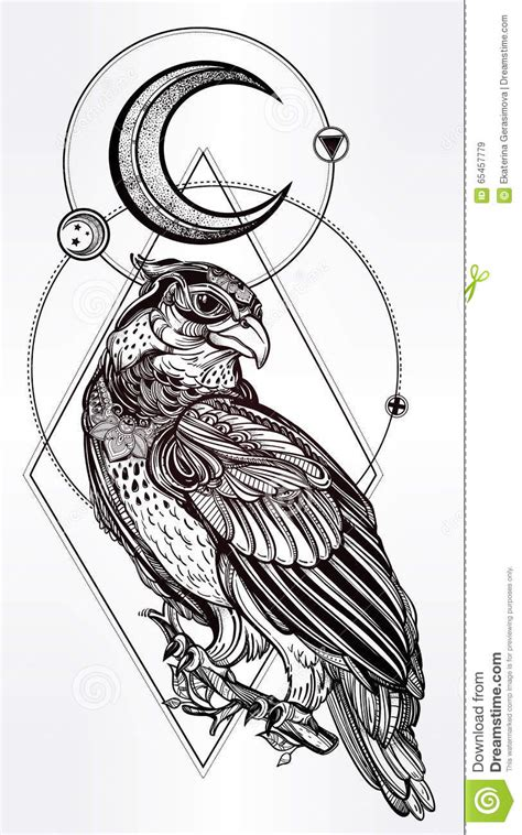 detailed hand drawn bird  prey stock vector