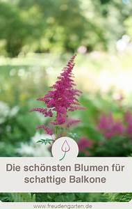 Blumen Für Schattigen Balkon : schattenpflanzen f r den balkon gartengestaltung pinterest pflanzen garten und balkon ~ Orissabook.com Haus und Dekorationen