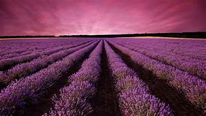 wallpaper lavender field sky mountain provence