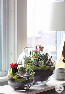 Minigarten Im Glas : 25 indoor succulent diy project ideas page 3 of 4 ~ Eleganceandgraceweddings.com Haus und Dekorationen