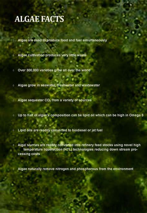 About Algae   Regional Algal Feedstock Testbed