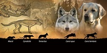 Wolves and Dogs - Little Big History of the Canine