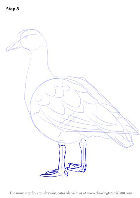 learn   draw  egyptian goose birds step  step