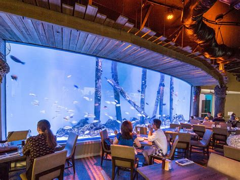 dundees restaurant  replace aqualuna  cairns aquarium