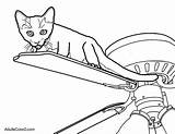 Cat Coloring Pages Fan Funny Wannabes Requirement Mastered Surprise Element Lion Ve Library Clipart Getcolorings Popular Aww sketch template