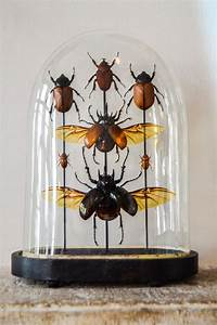 Insects: The taste of Petrol and Porcelain | Interior ...