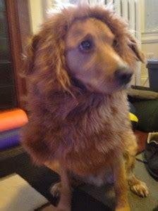 lion mane dog costume needles