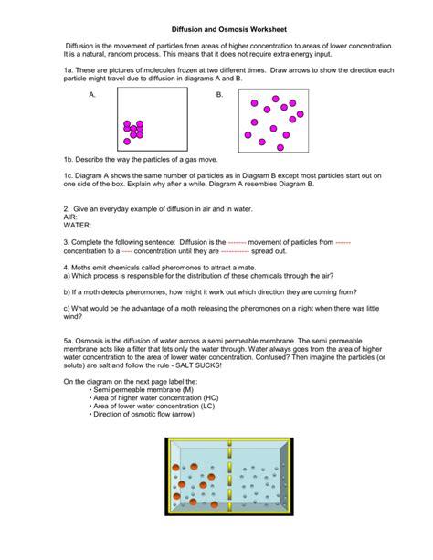 diffusion and osmosis worksheet
