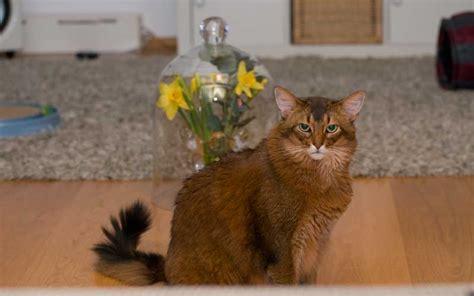 unbedenkliche pflanzen für katzen unbedenkliche pflanzen f 252 r katzen leider gar nicht so einfach