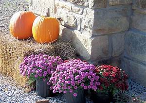 Pumpkins And Mums Free Stock Photo Public Domain Pictures