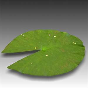 water lily leaf obj