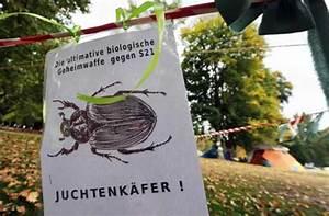 Das Kleine Schwarze Stuttgart : bauprojekte und artenschutz ein k fer lehrt das f rchten stuttgart 21 stuttgarter zeitung ~ Indierocktalk.com Haus und Dekorationen