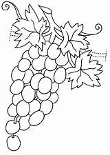 Coloring Grapes Pages Grapevine Template Strawberry Fruits Vegetables Raskraska Vinograd Coloringtop sketch template