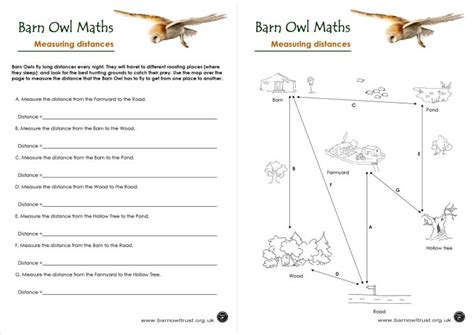 barn owl conservation numeracy educational resources the barn owl trust