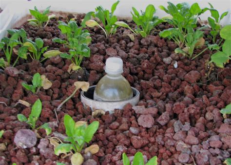 pumice for gardening horticultural lava cinders acme sand gravel