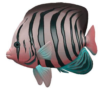 great aquarium fish gif images   animations