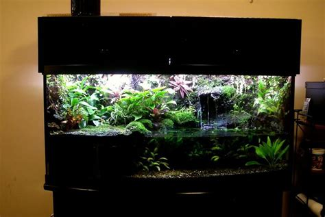 land and water aquarium 17 best ideas about frog terrarium on vivarium tree frog terrarium and fish tank