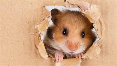 Hamster Verrassingspakket Friday