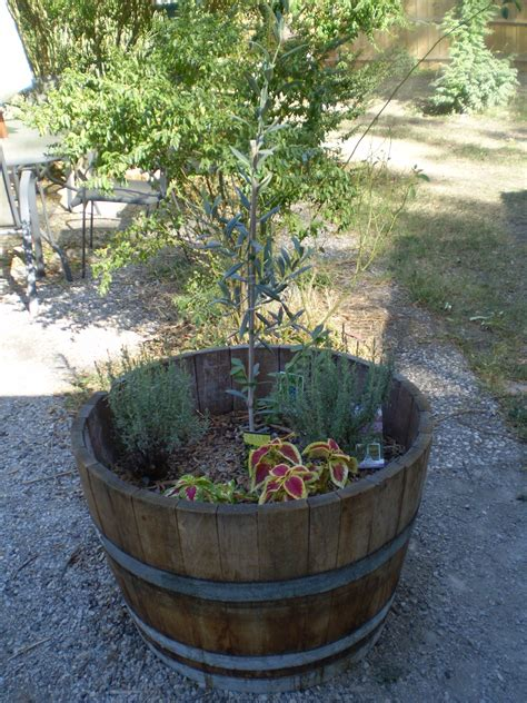 wine barrel planters wine barrel planter tub before after and after after
