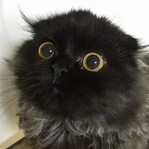 Gimo, le chat avec des yeux ronds comme des billes - Image