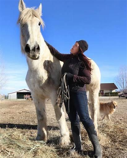 Corvallis Draft Horse Horses Cross Percheron Woman