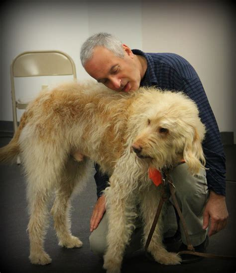 canine hip nudge behavior means