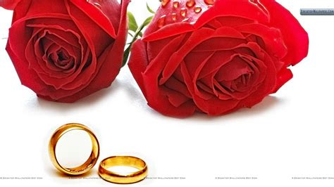 make2fun rose red beautiful roses rose pictures red
