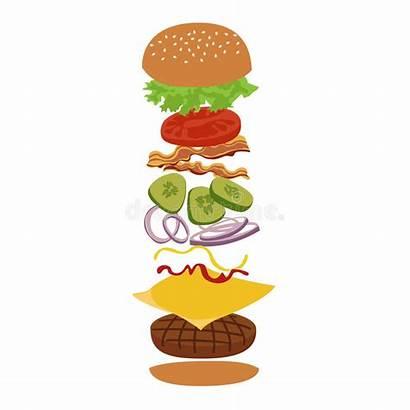 Ingredients Burger Illustration Vector Infographics Hamburger