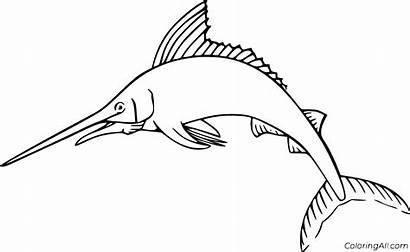 Marlin Coloring Atlantic Easy Printable Fish