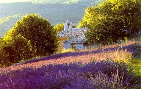 Fluxblog: ... in the heart of the Luberon & the Alpilles