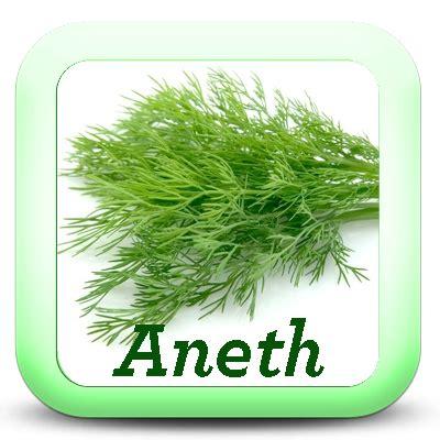 oseille cuisine les herbes aromatiques dans la cuisine je cuisine mon