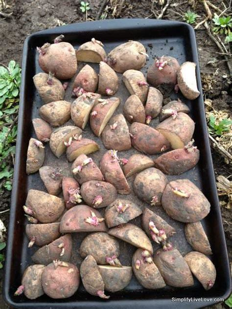 how to potatoes from garden how to plant potatoes no dig method simplify live
