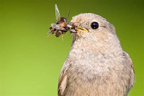 Warum Insekten Im Garten So Wichtig Sind Nabu