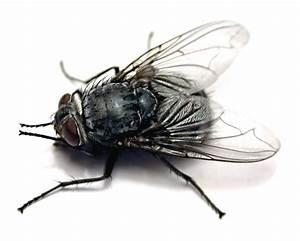 Mini Fliegen Am Fenster : wie kann man die l stige fliege aus dem wohnung vertreiben insekten ~ Eleganceandgraceweddings.com Haus und Dekorationen