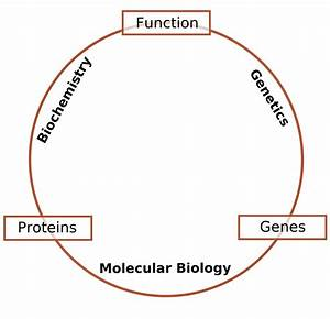 File Schematic Relationship Between Biochemistry  Genetics