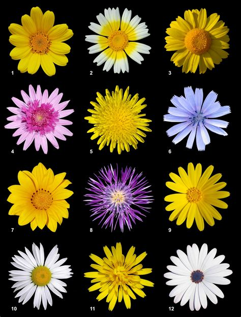 type of flowers different types different types of flowers