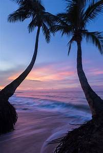 Beautiful, Jamaica and Trees on Pinterest