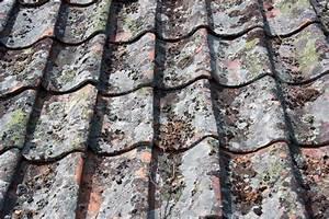 Fliesen Alte Muster Historische Alte Fliesen Bodenfliesen Zahna