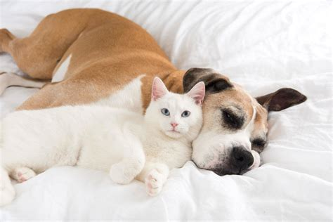 Sleep And Pets by Sleeping With Pets It May Help You Sleep Better Unless