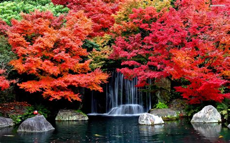 colorful trees in the autumn wallpaper location ideas