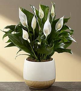 6 Air Purifying Plants That Will Clean The Air And Boost ...