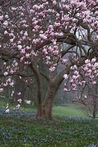 Rosenrost Was Tun : die besten 25 rosa b ume ideen auf pinterest rosa ~ Lizthompson.info Haus und Dekorationen