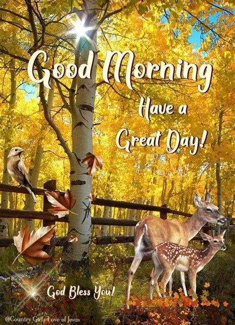 deer bird good morning quote pictures   images