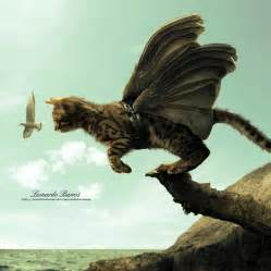 flying with a cat cat flying by leonardo barros photoshop creative