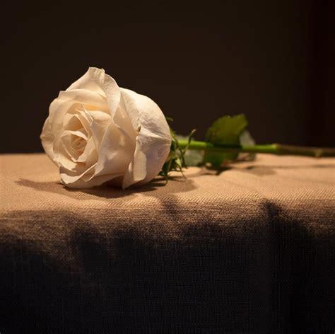 Single White Rose By Muffet1 On Deviantart